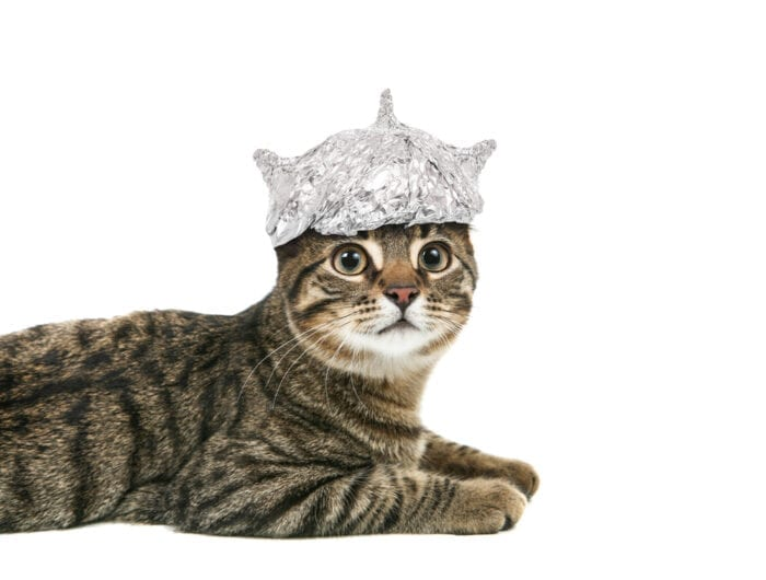 cat-in-foil-hat