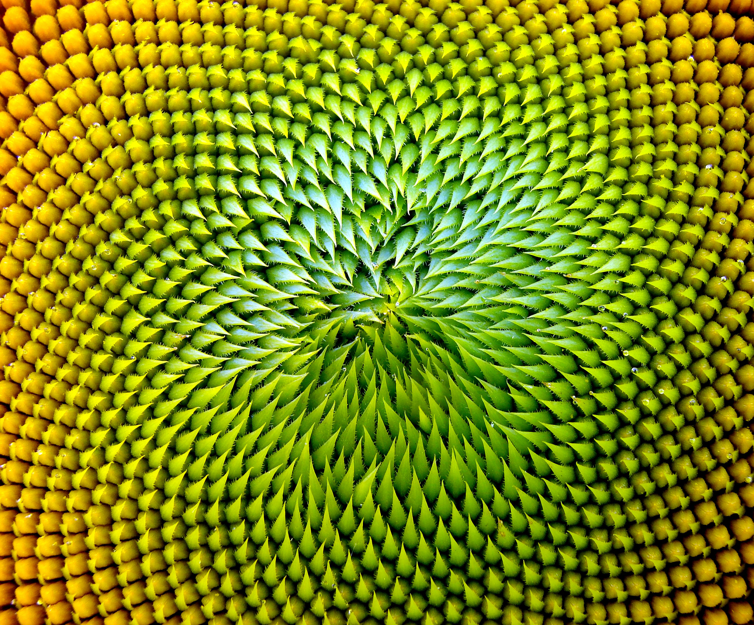 patterns in nature, benfords law